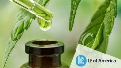 Contract Filling Company For CBD Products